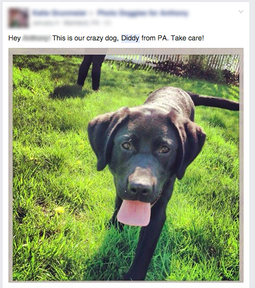Facebook post of Diddy the dog