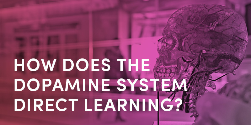 How Does The Dopamine System Direct Learning?